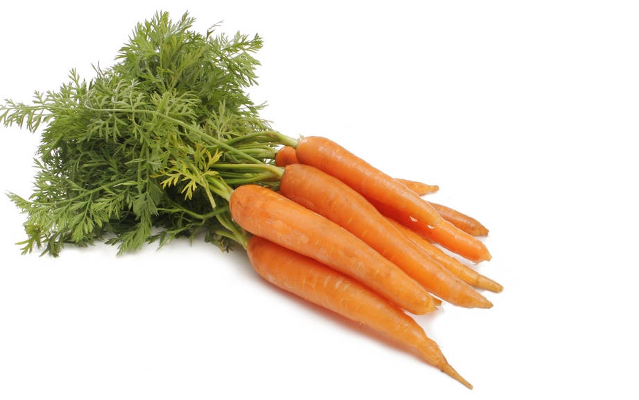 How To Say Carrot In Spanish What Is The Meaning Of Zanahoria Ouino Sustantivo de género exclusivamente femenino, que lleva los artículos la o una en singular, y las o unas en plural. how to say carrot in spanish what is